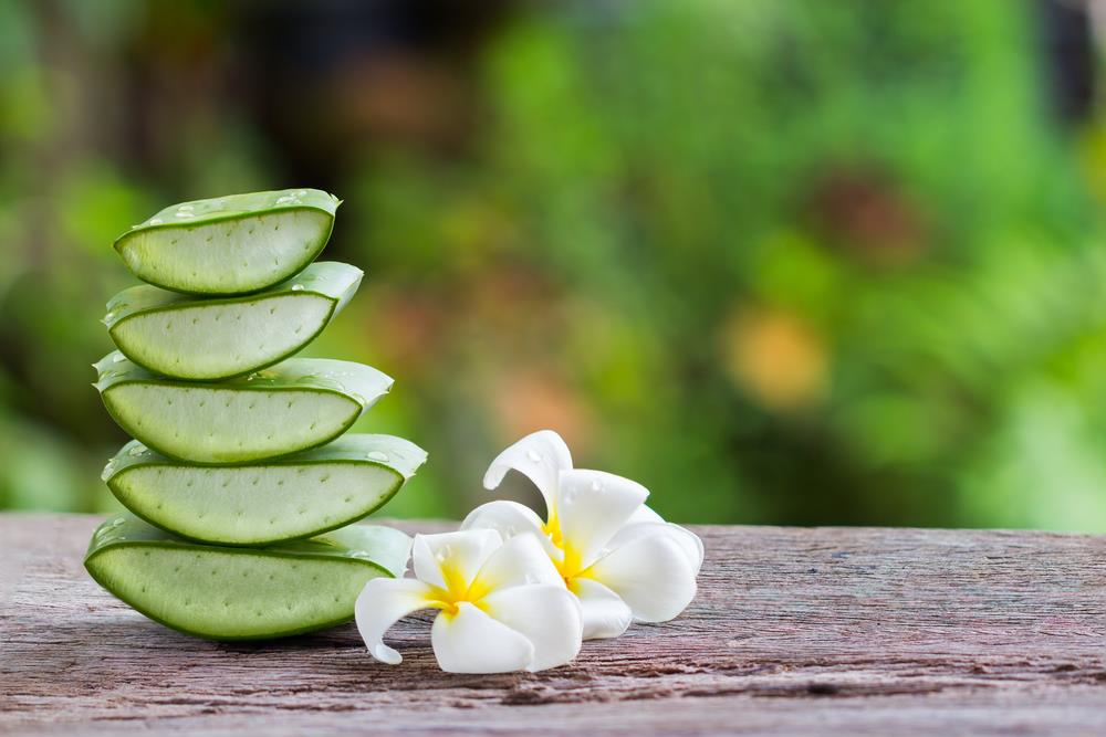 Taking Aloe Vera daily in diet