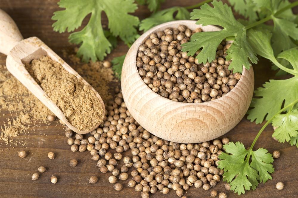 Seeds of coriander