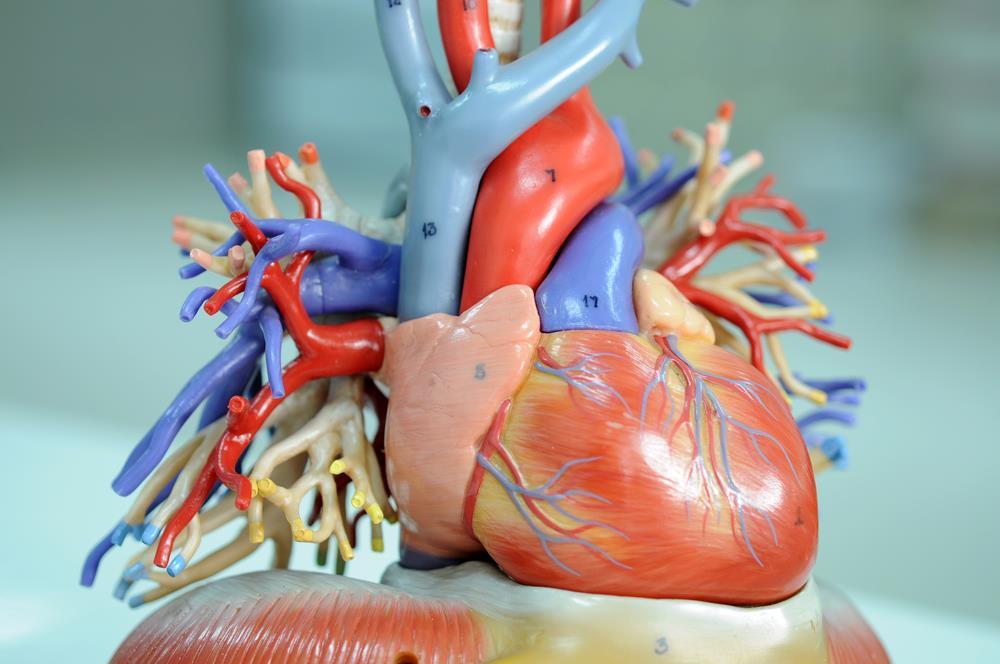 Diseases of Coronary Arteries