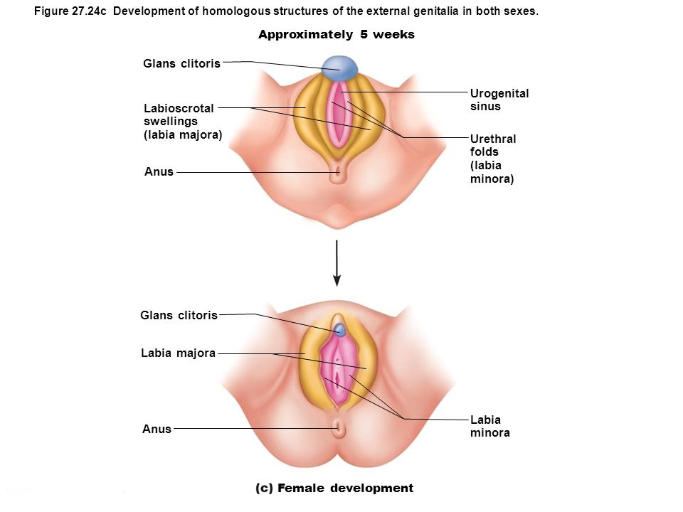 Symptoms of Swelling Across Labia Majora
