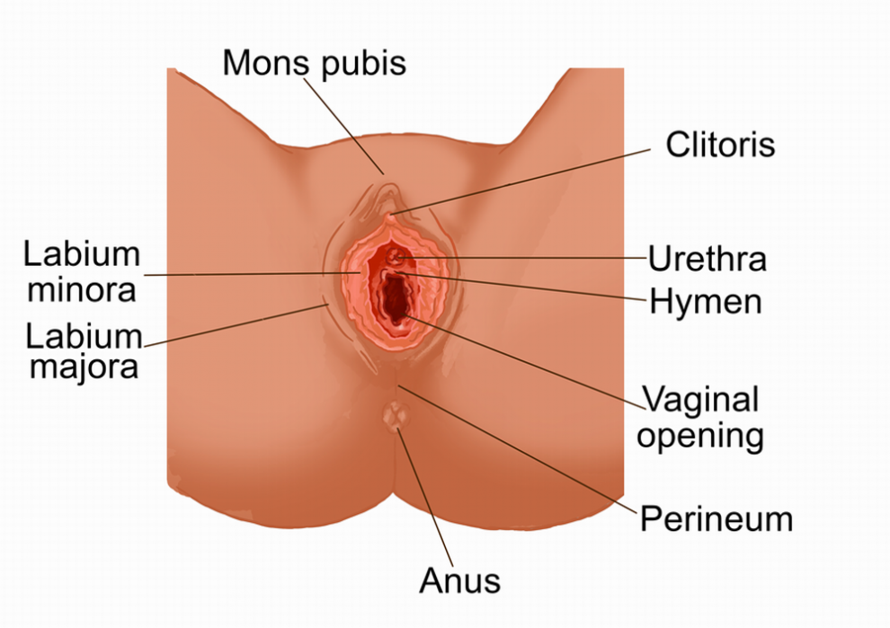 Fucking vulva cancer symptoms and side effects